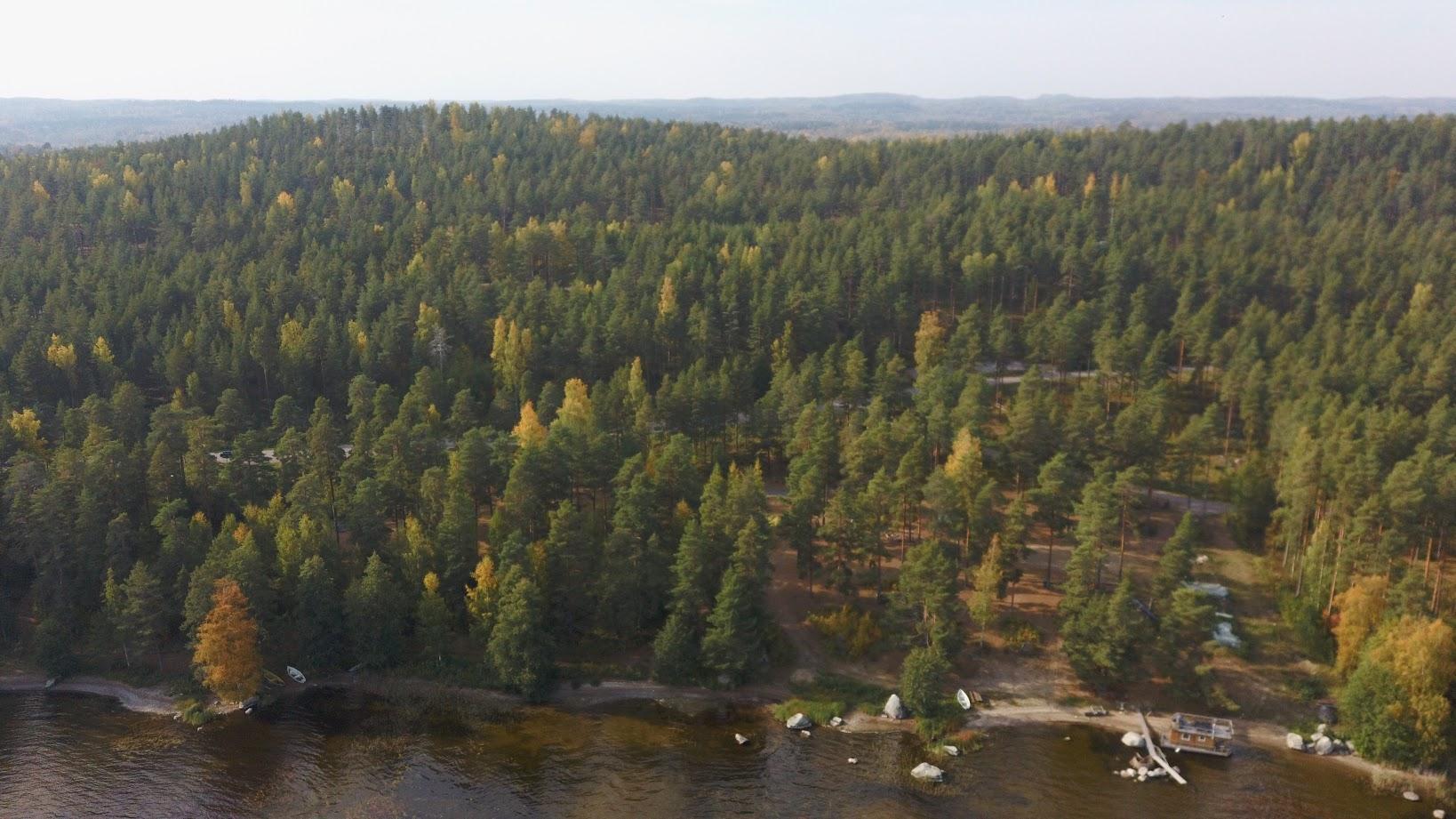 Aarni ja metsää.JPG